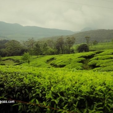 A scenic drive from Cochin to Munnar
