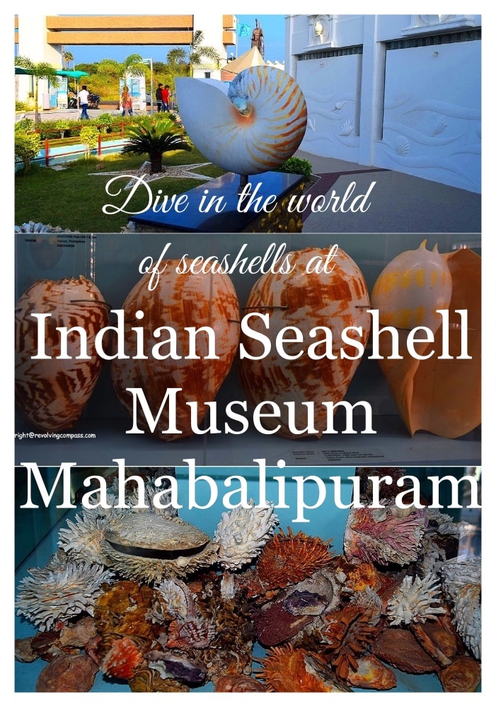 Indian Seashell Museum. That consists of the largest collection of seashells in Asia. It has over 2300 species of sea shells. And there are 40000 plus sea shells in this museum on display. A must see in Mahabalipuram