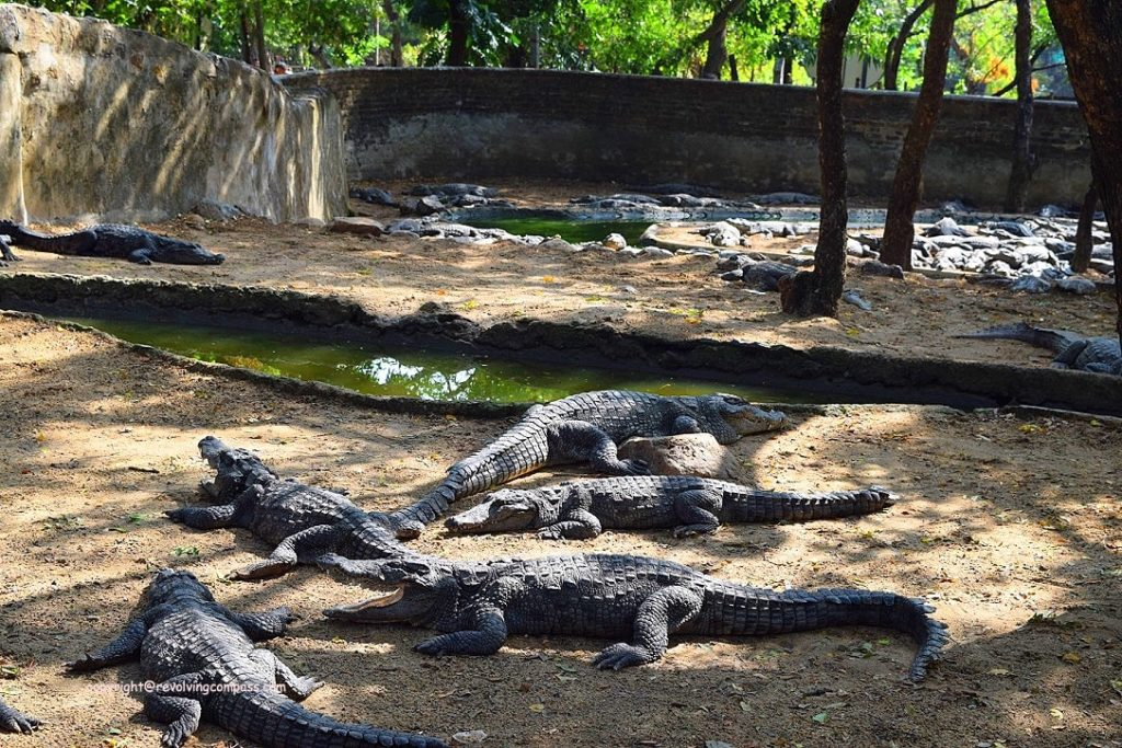 Crocodile farm : Things to do in Mahabalipuram