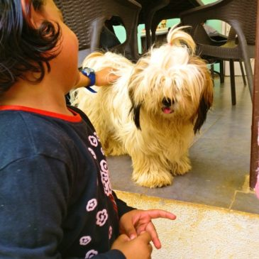 Did you know about TherPUP dog cafe Bangalore?