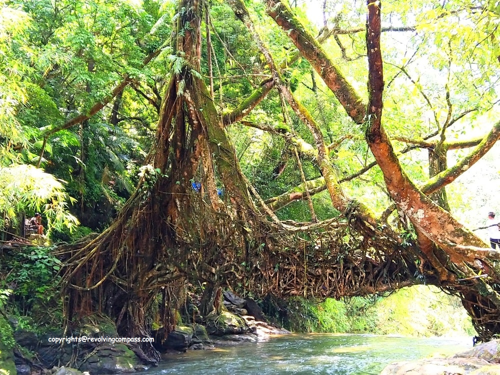 The Extraordinary Living Root Bridge In Meghalaya India