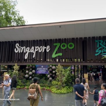 Visiting the Singapore Zoo with kids