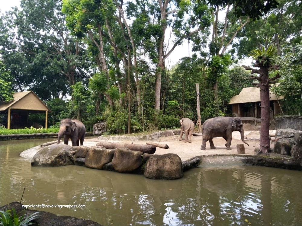 visit Singapore zoo with kids